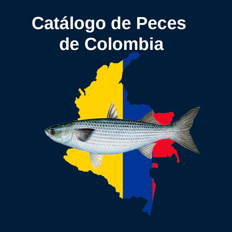 Acictios Catálogo de peces de Colombia