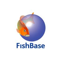 Acictios - Fishbase